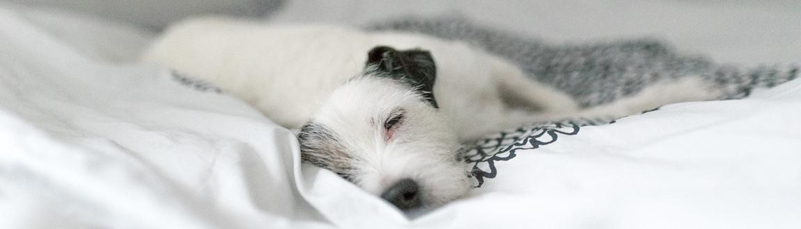 Nutrolin® koirat