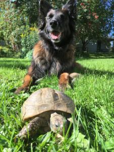 Kiiran ja Konnan kuvasi Sari Kokko