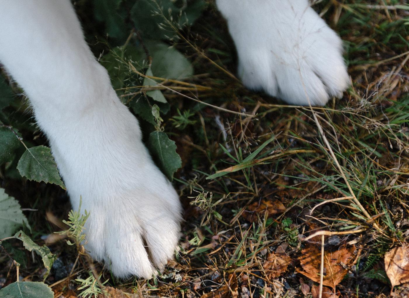 Nutrolin® blogi - Pipa Pärssinen kertoo mitä koiran stressi on?