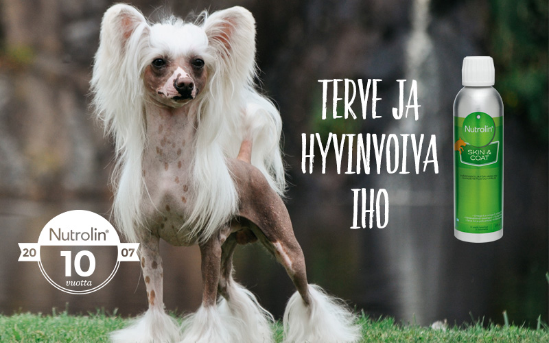 Terve_iho