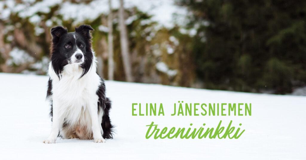 Elina Jänesniemi treenivinkki