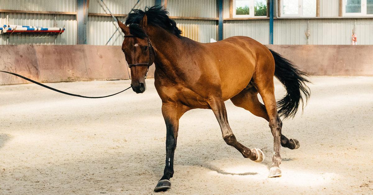 Miten täydentää hevosen ruokinta? Osa 1 - Energia